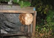 蜂の巣状況写真(例)